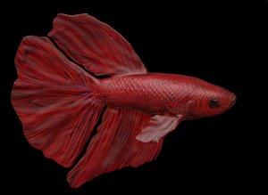 Red Male Betta Fish 3D
