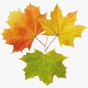 Maple Leaves Collection V1 3D model