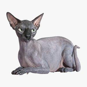 3D sphynx cat lying model