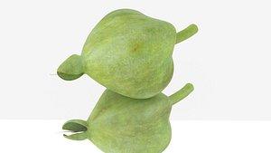 Barringtonia asiatica fruit seed 3D model