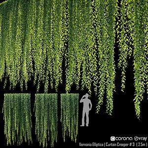 Curtain creeper Vernonia Elliptica 04 3D model