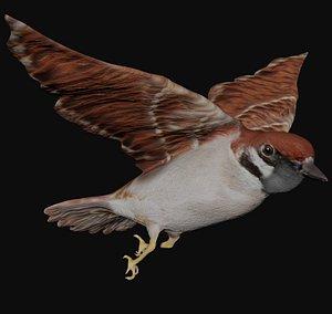 rigged flying bird 3D