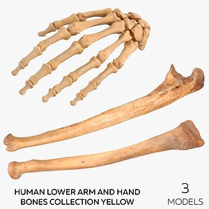 3D Human Lower Arm and Hand Bones Collection Yellow -  3 models