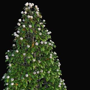 XfrogPlants Southern Mangolia - Magnolia Grandiflora 3D model