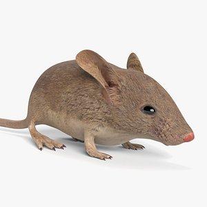 mouse animal mammal model