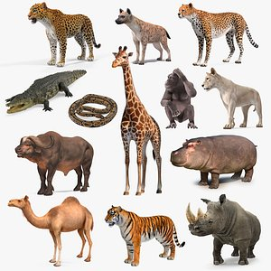 African Animals Collection 10 3D model