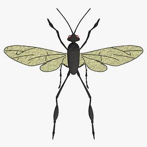 bug 3D