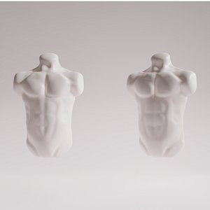 male torso sculpt 3D model
