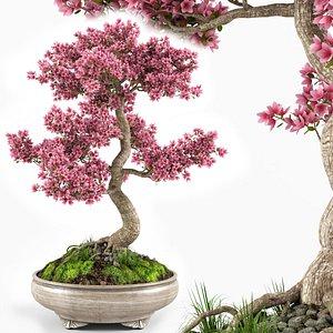 3D sakura bonsai tree model