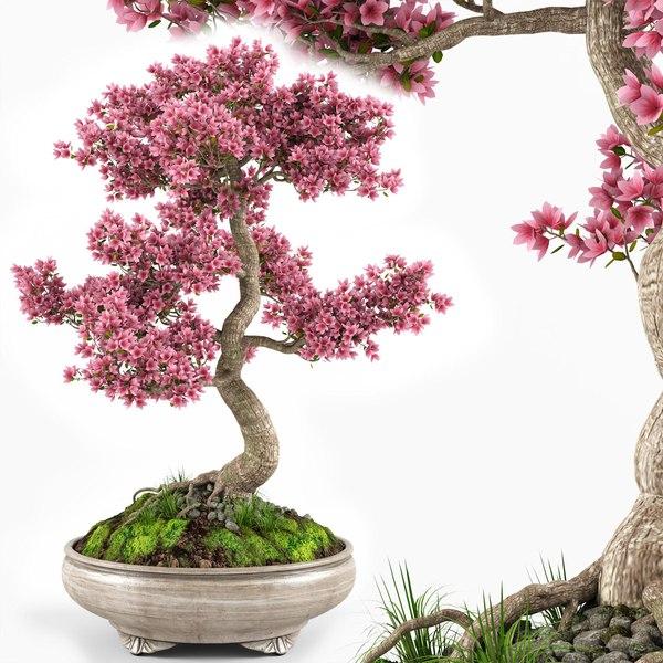3d Sakura Bonsai Tree Model Turbosquid 1683687