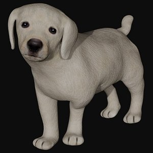 3D model Fully rigged low poly Labrador puppy