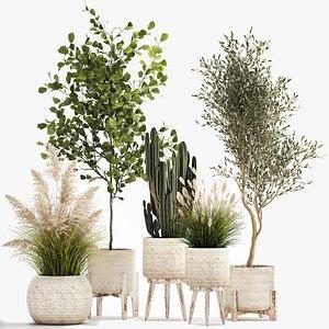 3D Ornamental plants in rattan baskets 1035 model