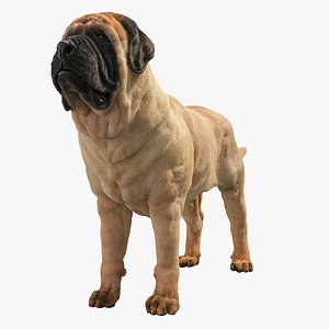 3D model English Mastiff