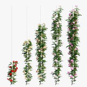 3D rose plant