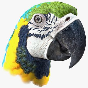 Blue and Yellow Macaw Parrot Head 3D