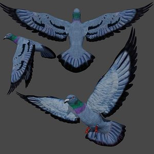 rigged Flying Pigeon Dove 3D
