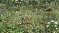 20 Summer Ground Plants