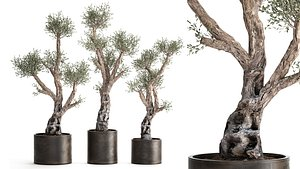 Olive tree in a rusty flowerpot for the interior 990 model
