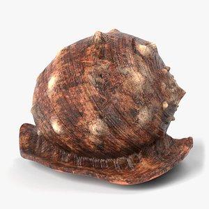 seashell shell sea 3D