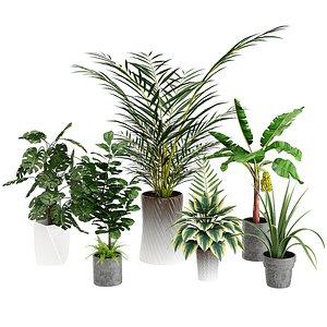 3D banana plants dracaena