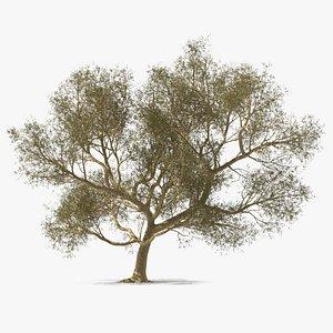3D Green Tabebuia Avellanedae Tree