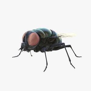 3D housefly model