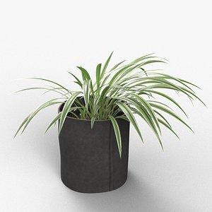 3D plant spider monkey model
