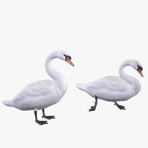 3D model Mute Swan