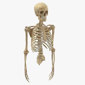 3D real human rib cage
