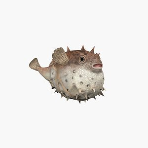 3D Hedgehog Fish model