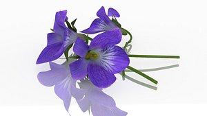 3D model violet flower plant aroma