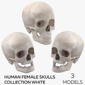 Human Female Skulls Collection White - 3 models model