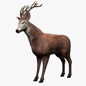 Lowpoly Deer With Fur model