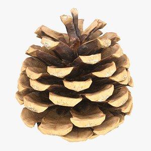 Pine Cone 8 3D model