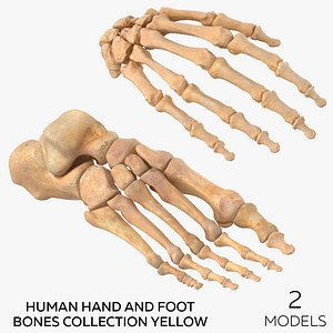 3D Human Hand and Foot Bones Collection Yellow - 2 models