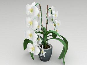 white orchid 3D model