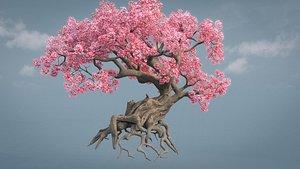 3D model Cherry blossoms