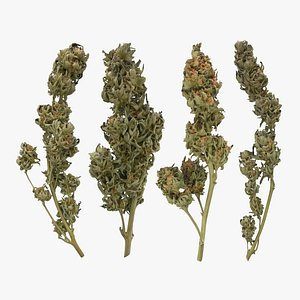 Cannabis Branch Collection 3D model