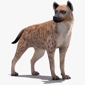 3D model rigged hyena