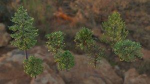 Trees Collection OBJ FBX DAE Collada 3D model