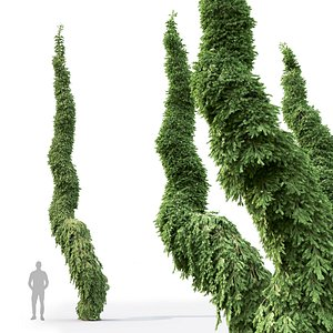 3D model Picea Omorika Bruns 02