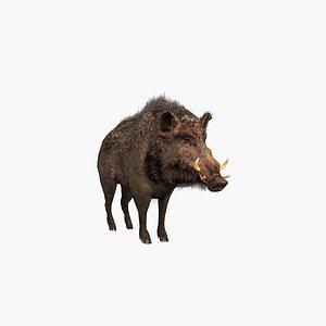 3D Boar