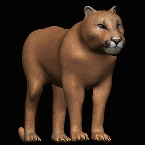3D fully rigged cougar model