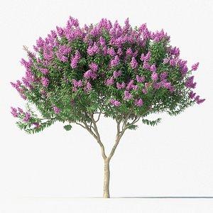 Crape myrtle No 1 with flowers 3D model