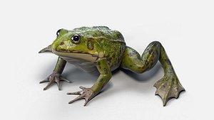 3D pool frog