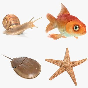snail goldfish fish model