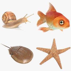 snail goldfish fish model