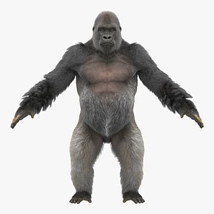 3D gorilla fur objects model