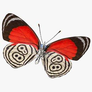 Diaethria Clymena Butterfly 3D model