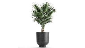 3D decorative palm tree flowerpots model